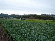 農村調査部2002-2006