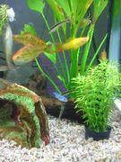 熱帯魚初心者