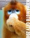 熊本市動植物園を応援する会