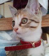 愛猫ルフナの日記