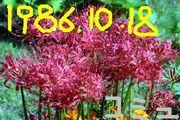 1986年10月18日生まれ!