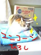猫ひろしが好き!!