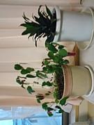 観葉植物フリーク