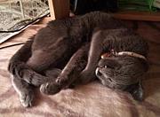 猫を抱えて眠りたい