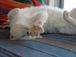 猫のしもべです・・・