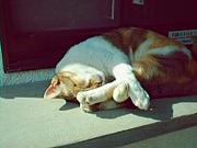 猫を虐待しようかと思っている
