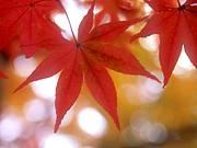 広島の休日をもっと楽しもぉ