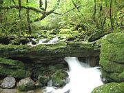 屋久島に行く人いますか?