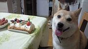 ☆愛犬の誕生日☆同じ日を探そう