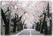 【2000年卒】横浜市立岩崎中学校
