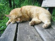 I LOVE ノラ・猫