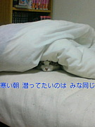猫川柳の会