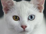 [ダイヤの瞳]カオマニー
