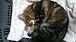 猫ネコねころんだ。札幌〜帯広間