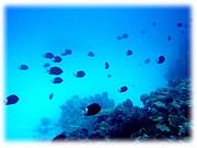 北里大学海洋生命科学部08年入学