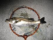 神戸港の釣り