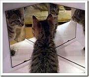 鏡に不細工が映ってるんですけど