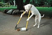 愛犬長生き健康生活
