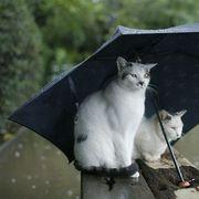 「雨の歌」が好き
