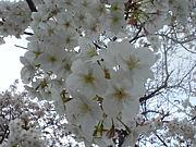 ***春の温泉旅行同好会***