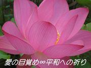 愛の目覚め∞平和への祈り