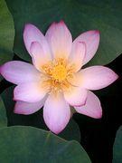 憩いの場 Lotus