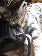 猫とカメラがすきなのだ。