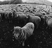眠れなすぎて脳内で羊が無限増殖