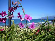 ハワイアンソング&ウクレレTAMA
