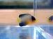 Marine Fish GoGo