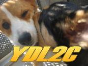 YDL2C 横浜犬好2倶楽部