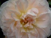 www.love-light-joy.com