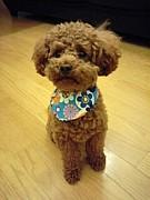 犬服for†DOG