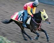 デットシーピサ(競走馬)