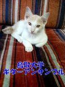 鳥取大学ギターアンサンブル