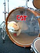 CAT  ドラム専攻