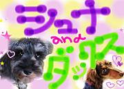 ★シュナ and ダックス★