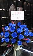 †BLUE ROSE†