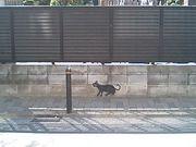 池袋の黒猫ファン倶楽部