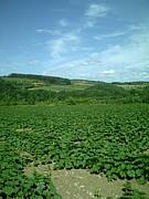 北海道の農家の嫁