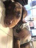 ペット栄養管理士