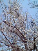 2000年卒 春日丘高校3−8