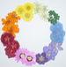 color-circle色彩の輪!