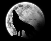 狼☆ニホンオオカミに遇いたい団