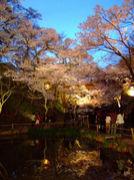 高遠の桜が好き♪