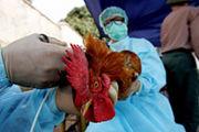 鳥インフルエンザ対策マニュアル