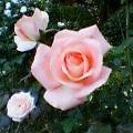 季節の花写真