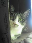 We Love CAT ねこ 猫 ネコ !!