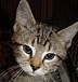 猫の額は意外に広い