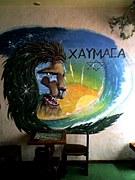 ����XAYMACA